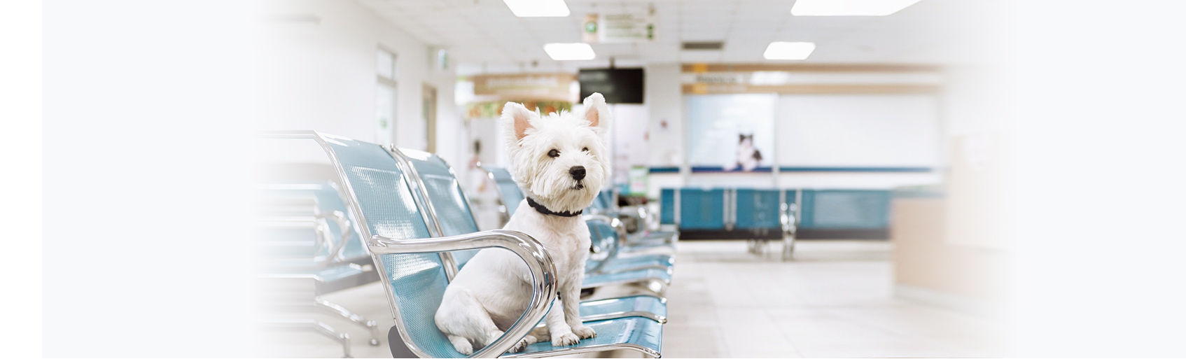 Veterinary Websites - TheDocSites
